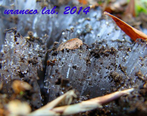 1月2日霜柱