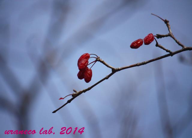 1月5日冬枯れ野2