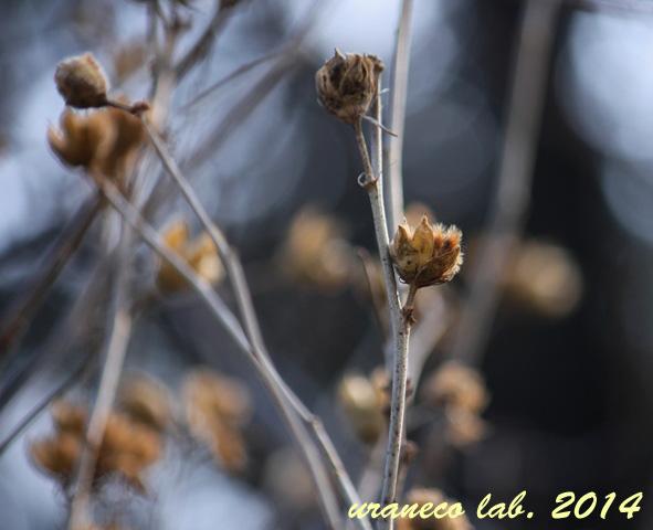 1月5日冬枯れ野