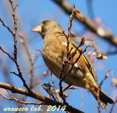1月5日ナゾの鳥