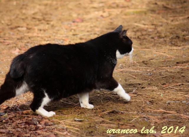 1月5日横切る猫