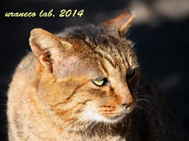 1月5日日向の猫