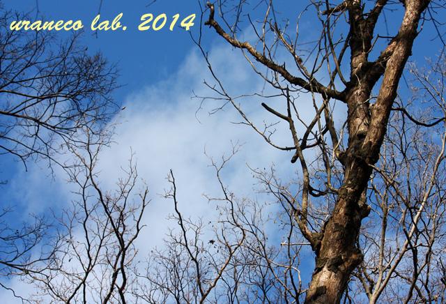 1月10日冬枯野