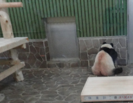 kobe panda1
