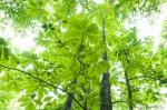 ヒプノセラピー スピリチュアルライフ 緑 輝き