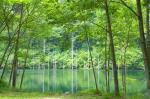 ヒプノセラピー スピリチュアルライフ 自然 緑
