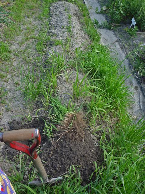 耕作放棄地みたい