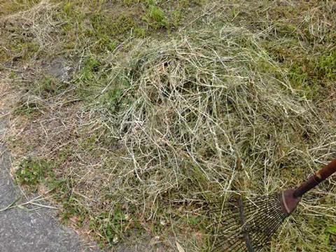 草を集める