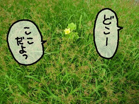 草原のカボチャ