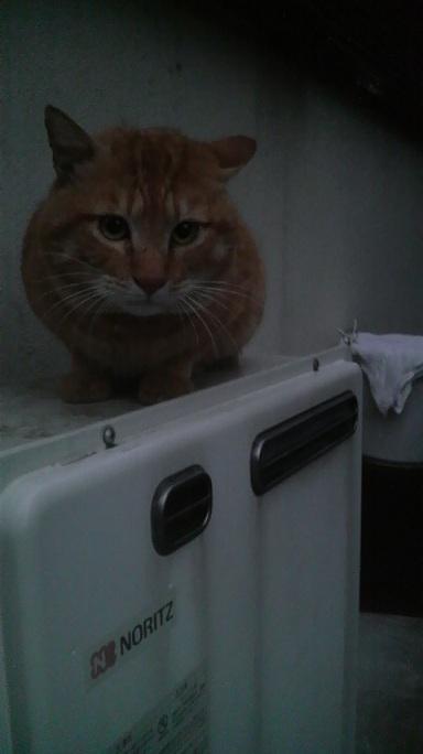 P1000464首輪つき猫