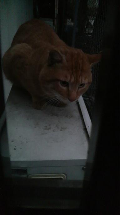 P1000463首輪つき猫