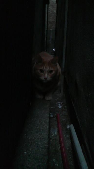 P1000447お隣の猫