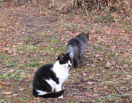 038、峯公園のネコ。