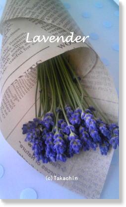 lavender11-01