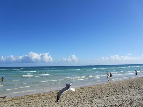 マイアミビーチは今日も夏です。