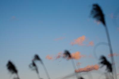 20110117-DSC_0694.jpg