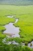 極彩色の湿原