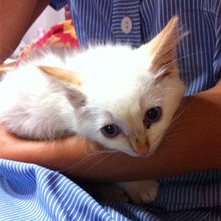 cat_24215_2.jpg