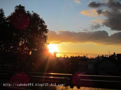 陽がかげると寂しくなります。