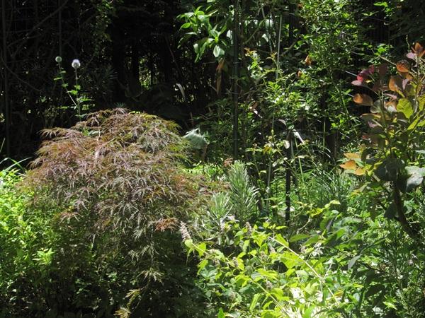庭の様子2