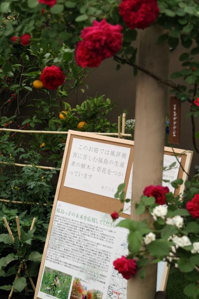 福島の草花