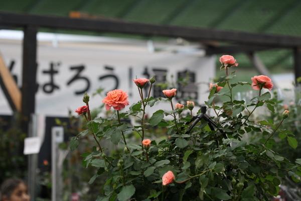 がんばろう福島