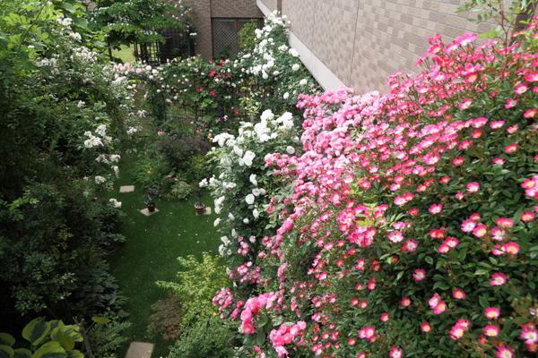 満開の庭1
