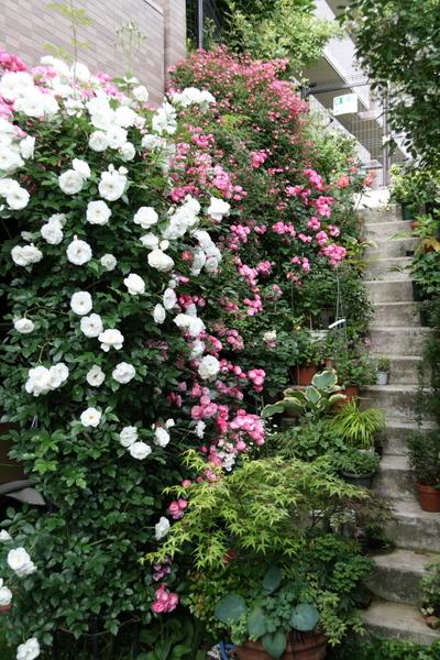 満開の庭2
