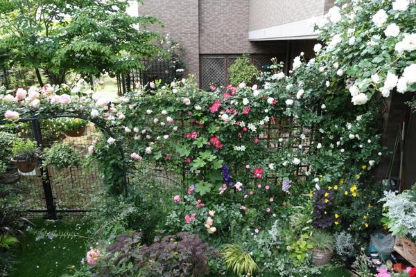 バラ花壇、フェンスとアーチ