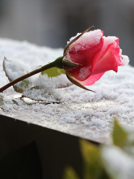 仙台・雪のベランダ