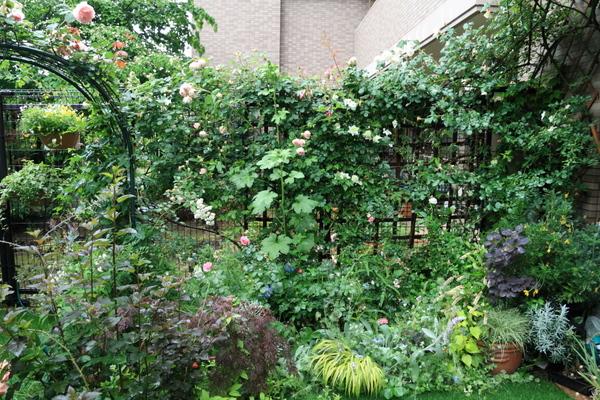 アーチ、フェンスのバラ