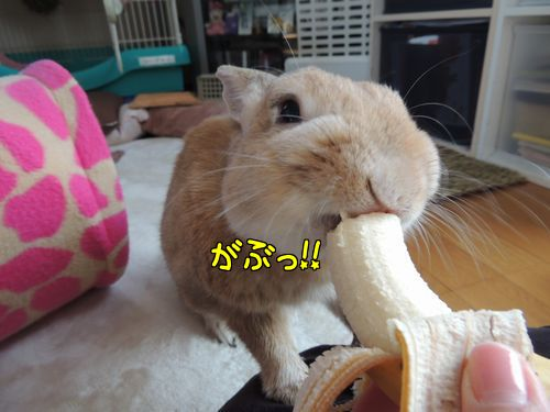 朝バナナ4