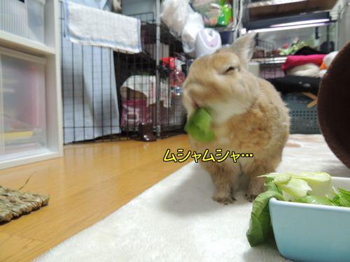 チンゲン菜2