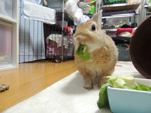 チンゲン菜3