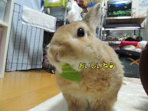 チンゲン菜4