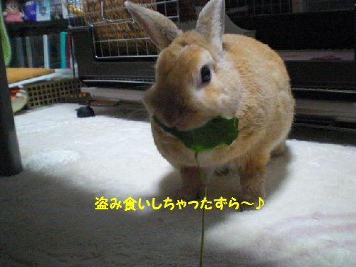 びようしつ6