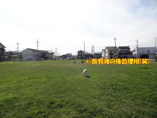 DSC01989.jpg