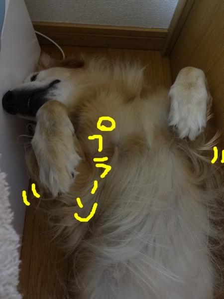 DSC02044.jpg