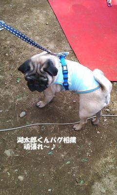 小太郎君相撲