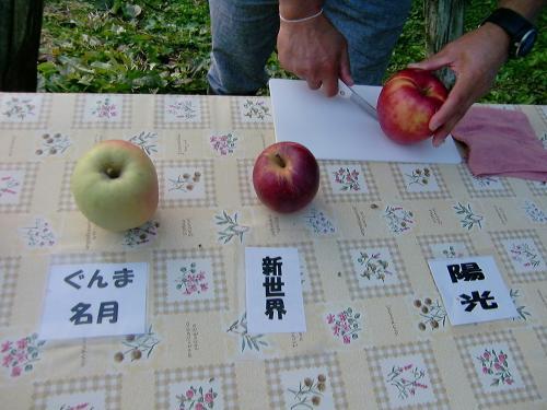 りんごの試食1