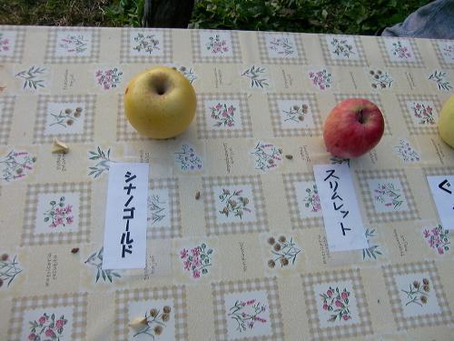 りんごの試食2