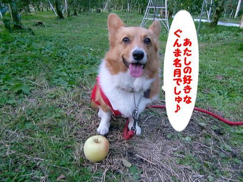 りんご狩り・ぎん1