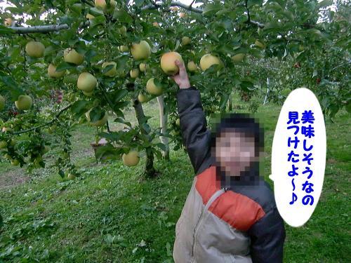 りんご狩り・チビ兄