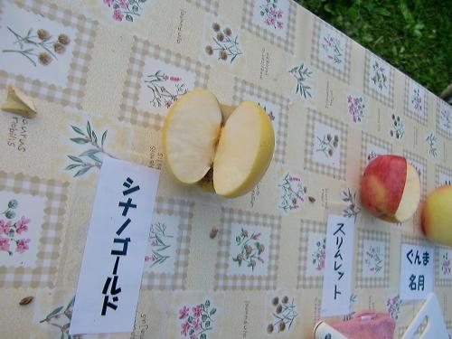 りんご狩り試食5