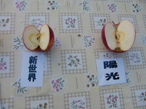 りんご狩り試食4