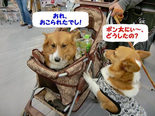 ぎん&ポン太君・会場1