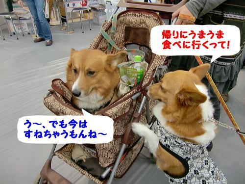 ぎん&ポン太君・会場2
