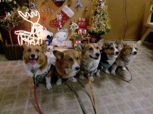 楽さんクリスマス・5コギ