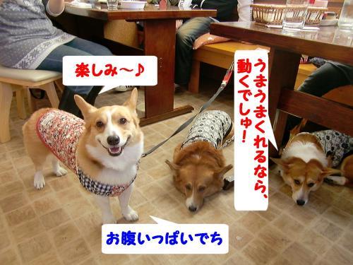 マリンちゃん&ポン太君&ラナちゃん