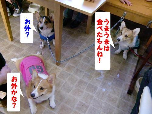ナナちゃん&マックス君&ラムネちゃん